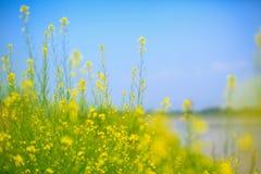 Żółta Błękitna zieleń Zdjęcie Royalty Free