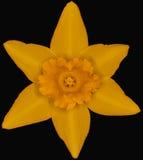 Żółta bogini Zdjęcie Royalty Free