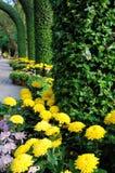 Żółta chryzantema Zdjęcie Royalty Free