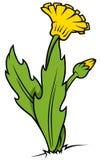 Żółta Dandelion roślina ilustracja wektor