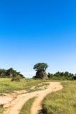 Żółta droga serengeti krajobrazu Tanzania Zdjęcie Royalty Free