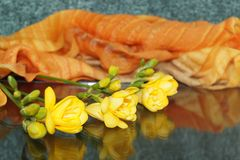 Żółta frezja Fotografia Stock