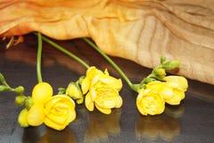 Żółta frezja Zdjęcia Stock