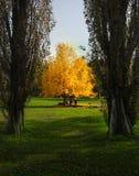 Żółta jesień Obrazy Royalty Free