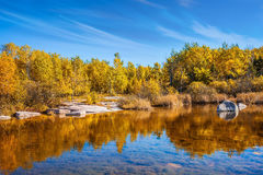 Żółta jesieni trawa fotografia royalty free