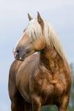 Żółta końska głowa na niebie Obrazy Stock