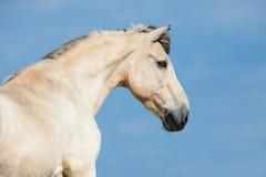 Żółta końska głowa na niebie Fotografia Stock