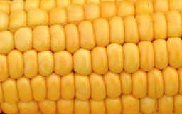 Żółta kukurudza zdjęcia royalty free