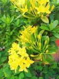 Żółta kwiat igła fotografia stock