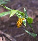 Żółta kwiat roślina Zdjęcie Stock
