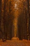Żółta lipowa aleja chmurzący jesień dzień Obrazy Stock