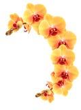 Żółta orchidei granica Zdjęcie Royalty Free