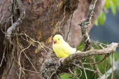 Żółta papuga na gałąź Zdjęcia Stock