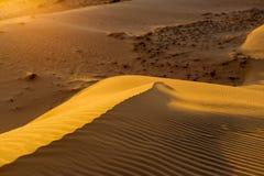 Żółta piaskowata falista diuny tekstura Obraz Royalty Free