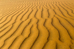 Żółta piaskowata falista diuny tekstura Zdjęcia Stock