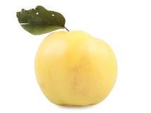 Żółta pigwa obraz stock