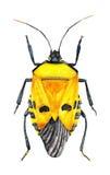 Żółta pluskwa ilustracja wektor