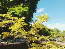 Żółta roślina Zdjęcia Royalty Free