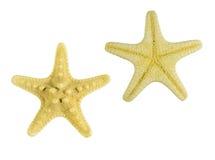 Żółta rozgwiazda odizolowywająca na białym tło widoku od above Zdjęcie Royalty Free