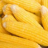 Żółta surowa kukurudza obrazy stock