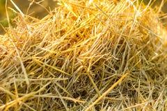 Żółta tekstury słoma Zdjęcie Stock