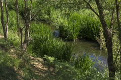 Żółta woda rzeczna na zielonym lasowym brzeg Obraz Royalty Free