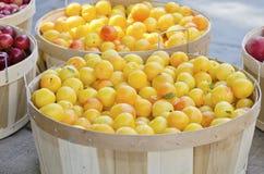 Żółte śliwki Zdjęcia Stock