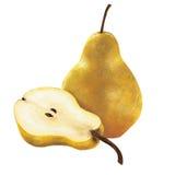 Żółte bonkrety Obraz Royalty Free