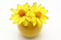 Żółte cynie w wazie Zdjęcie Royalty Free