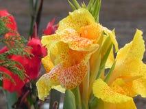 Żółte orchidee Zdjęcie Royalty Free