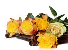 Żółte róże na białym tle Fotografia Royalty Free