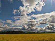 Żółtego gwałta pola bielu wielkie chmury Obraz Stock