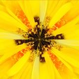 Żółtego kwiatu centrum kolażu Geometryczny wzór Obraz Royalty Free