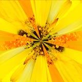 Żółtego kwiatu centrum kolażu Geometryczny wzór Obraz Stock