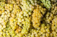 Żółtego wina winogrono Obraz Stock