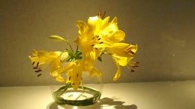 Żółtego złota kwiat Obrazy Stock
