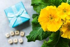 Żółtej wiosny primula kwiatu prezenta pierwiosnkowy pudełko dla macierzystego dnia Zdjęcia Stock