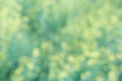 Żółtej zieleni bokeh kwiecisty tło, obiektyw plama Obraz Royalty Free