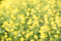 Żółtej zieleni bokeh kwiecisty tło, obiektyw plama Zdjęcie Stock