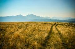 Żółty łąka krajobraz z błękitnymi górami Zdjęcia Royalty Free