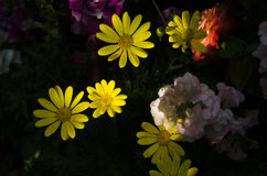 Żółty światło Fotografia Royalty Free
