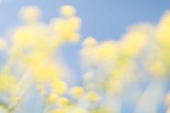 Żółty błękitny kwiecisty bokeh tło, obiektyw plama Zdjęcie Royalty Free