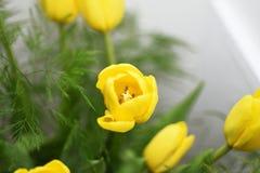 Żółty bukiet tulipany obrazy royalty free