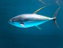 Żółty dżinu tuńczyka postu chodzenie Zdjęcia Stock