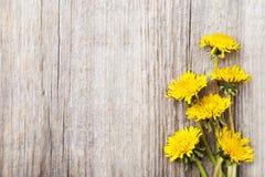 Żółty dandelion Fotografia Royalty Free