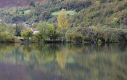 Żółty drzewo na jeziorze Zdjęcia Royalty Free
