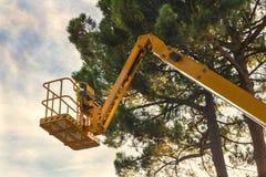 Żółty estradowy dźwignięcie w lesie Zdjęcia Stock