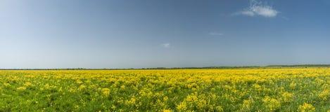 Żółty gwałta pole i niebieskie niebo panorama Zdjęcia Royalty Free