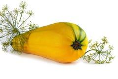Żółty jarzynowy szpik kostny Zdjęcie Royalty Free
