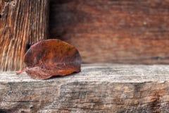 Żółty jesień liść Obrazy Stock